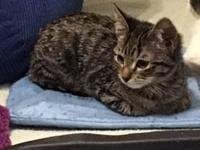 Cali's story I am a gorgeous brown tabby with an