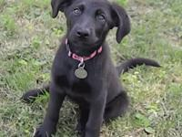 Cali's story If you are interested in adopting an