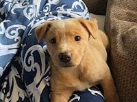 My story Cali is a sweet mixed breed puppy that loves