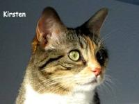 Calico - Allegra - Medium - Adult - Female - Cat