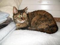 Calico - Belle - Medium - Adult - Female - Cat My name