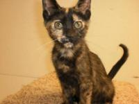 Calico - Blaze - Small - Young - Female - Cat Blaze is
