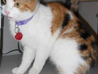 Calico - Cali - Medium - Adult - Female - Cat