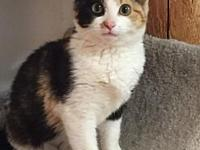 CALICO's story I was rescued in February 2018 from a