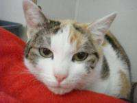 Calico - Calla Lilly - Small - Adult - Female - Cat
