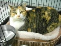 Calico - Calley - Large - Adult - Female - Cat Calley