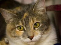Calico - Callie Id#207107 - Small - Baby - Female -