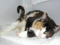 Calico - Cally Cat - Medium - Senior - Female - Cat My