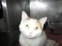 Calico - Cassie - Medium - Adult - Female - Cat My name