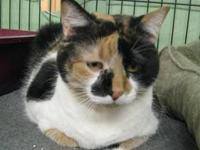 Calico - Coal Miner - Medium - Senior - Female - Cat