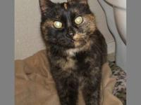Calico - Coco - Medium - Young - Female - Cat You can