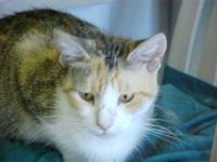 Calico - Cocoa - Medium - Young - Female - Cat You can