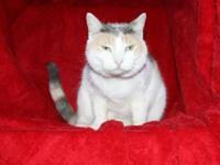 Calico - Crosley - Medium - Adult - Female - Cat