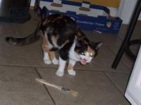 Calico - Edith - Medium - Young - Female - Cat Edith