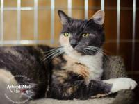 Calico - Emma - Small - Adult - Female - Cat Emma,