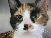 Calico - Esme - Small - Young - Female - Cat Has been