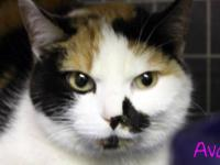 Calico - Fluffy - Medium - Young - Female - Cat Arrival