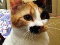 Calico - Jazmine - Small - Adult - Female - Cat