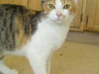 Calico - Jireh - Small - Young - Female - Cat Jireh is