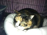 Calico - Kitten - Medium - Baby - Female - Cat Stop by
