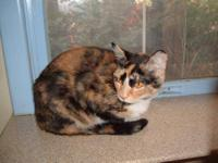 Calico - Kitty - Small - Young - Female - Cat Your
