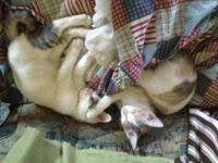 Calico - Leah And Harrison - Small - Young - Female -