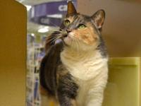 Calico - Libby - Small - Adult - Female - Cat Please