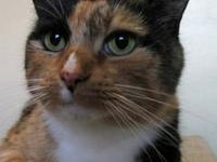 Calico - Lovey-sweet Baby - Small - Adult - Female -