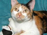 "Calico - Lydia - Small - Young - Female - Cat ""It is"