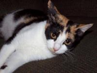 Calico - Mckenzie - Small - Young - Female - Cat Sweet