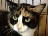 Calico - *minnie-long Term Resident - Medium - Adult -