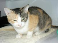 Calico - Molly - Medium - Adult - Female - Cat Hi