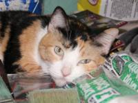Calico - Mom And Kittens (a - Medium - Adult - Female -