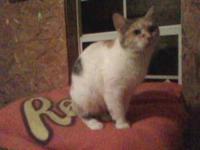 Calico - Mrs. Whiskers - Medium - Adult - Female - Cat