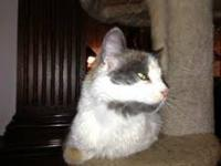 Calico - Mya - Medium - Adult - Female - Cat I had some