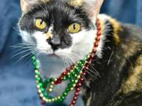 Calico - Patches - Small - Adult - Female - Cat You can