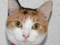 Calico - Penny - Medium - Adult - Female - Cat My