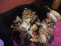 Bubbles Blossom Snd Buttercup are lovely cslico female