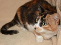 Calico - Petals - Small - Adult - Female - Cat Petals