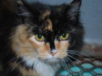 Calico - Rose - Small - Young - Female - Cat