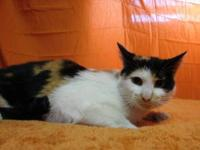 Calico - Rosie - Small - Young - Female - Cat