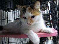Calico - Samantha - Small - Adult - Female - Cat