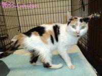 Calico - Sarah - Small - Adult - Female - Cat