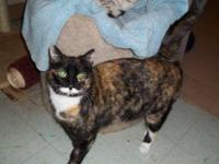 Calico - Snuggle Bear - Medium - Young - Female - Cat