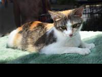 Calico - State Farm - Small - Adult - Female - Cat