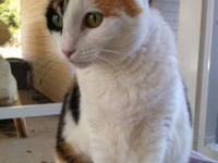 Calico - Stinker - Medium - Young - Female - Cat