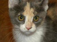Calico - Sugar And Spice Kitten Pair - Medium - Baby -
