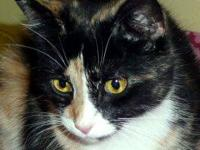 Calico - Tahlulah - Small - Young - Female - Cat