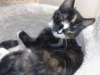 Calico - Tania - Medium - Baby - Female - Cat loves to
