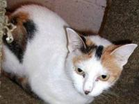 Calico - Vanessa - Small - Young - Female - Cat Vanessa